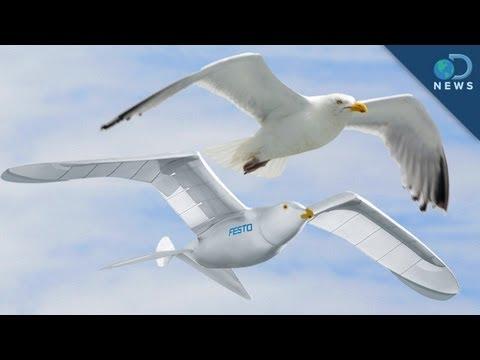 Robotic Bird Takes Flight