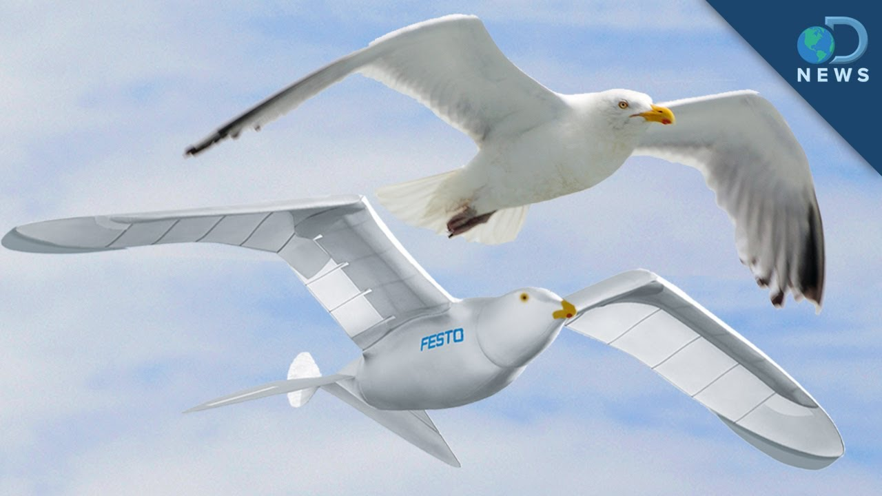 robotic bird takes flight youtube