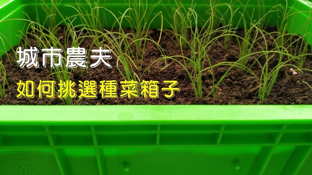 (城市農夫)透氣不滴水的種菜箱@陽臺種菜 - YouTube