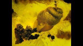 Уникальные находки живых существ застывших миллионы лет назад