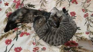 КОТ кормит котёнка. Что это??? (CAT feeds the kitten. What is it???)
