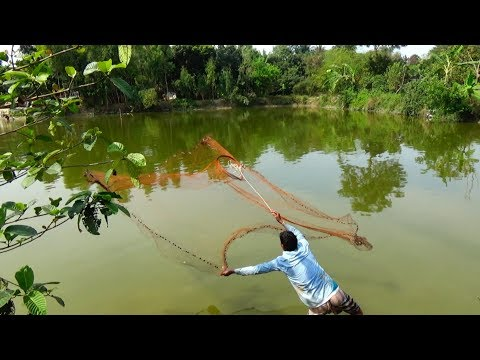 Net Fishing | Catching Fish With Cast Net | Net Fishing in the village (Part-222)