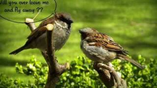 Sad love story of Bird Couple