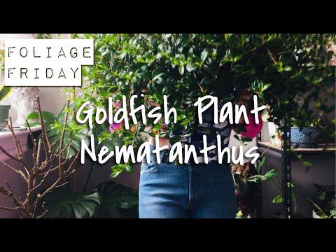 FOLIAGE FRIDAY | Ep. 18 — How To Care For Nematanthus (Goldfish Plant)