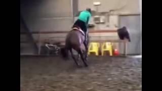 Конкур. Вот такие лошади, тренеры...Бывает. Думают это так просто и быстро научиться можно.