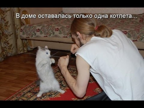 смешные животные картинки, фото смешных животных. - YouTube