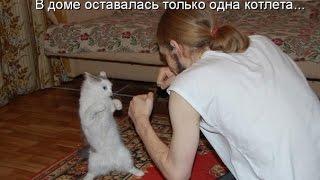 смешные животные картинки, фото смешных животных.