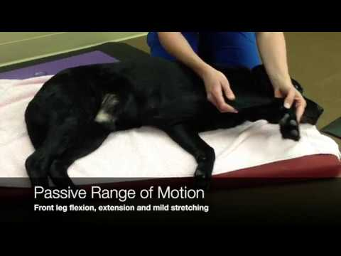 Therapeutic Exercise - Golden Gait Canine - Physical