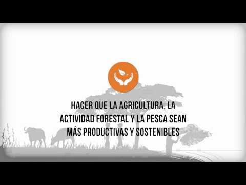 Objetivos estratégicos de la FAO