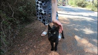 Black cat meowing non stop on the island