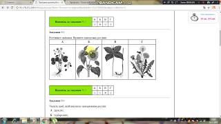 Тест 2. Біологія рослин. ЗНО. Підготовка