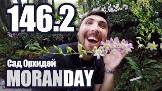 Moran Day 146.2 - Сад Орхидей