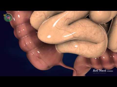 What is Appendix