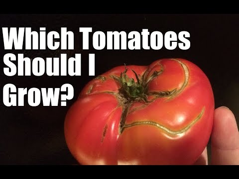 What Tomatoes Should I Grow?