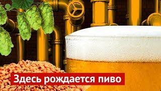 Всё, что надо знать о производстве пива