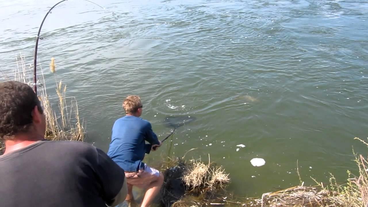 рыбалка на сазана на озере видео