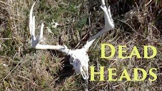 2 Big Buck Skulls in 2 Days | Catman Outdoors