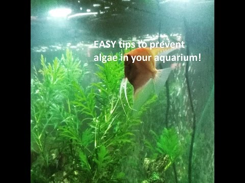 simple-tips-to-prevent-algae-from-breaking-out!