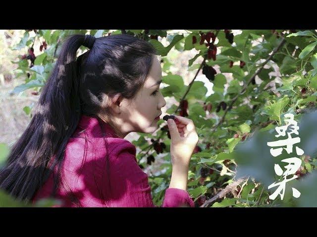 后山这颗桑葚熟了,一棵树摘了满满一篮子,泡罐酒再做了些桑果酱【滇西小哥】
