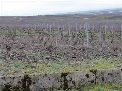 2014 France   La Champagne en Hivers, La Montagne de Reims, Chigny les Roses, by HabariSalam