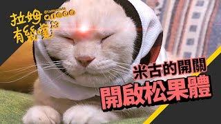 ►拉姆有幾噗◄ 貓的第三隻眼?米古的神秘開關┃Open cat's third eye ♧
