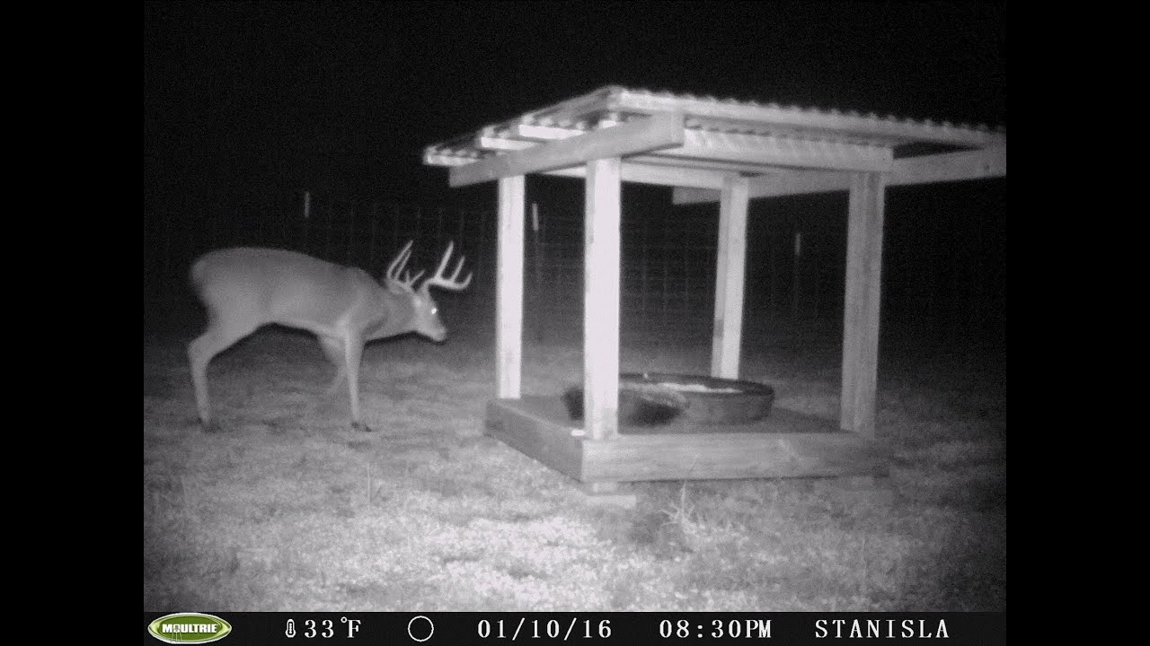 homemade effective hunt tip pin deer protein big feeder game hunting and inexpensive feeders