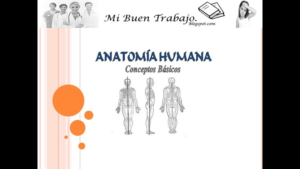 Conceptos Basicos de Anatomia Humana - Mi Buen Trabajo - YouTube