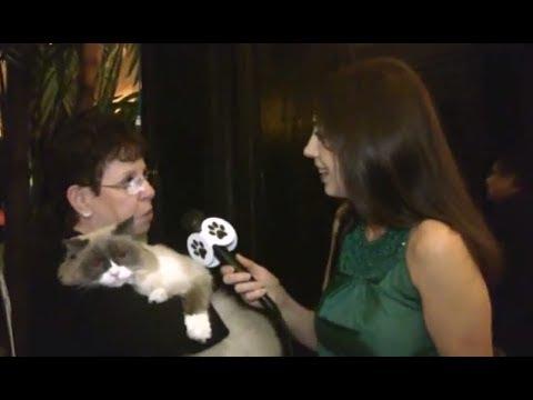 All For Animals #29 - Meet Matilda III, The New Algonquin Cat!