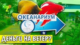 ДЕНЬГИ НА ВЕТЕР? Адлер Океанариум Sochi Discovery World Aquarium Отзыв