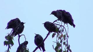 A big swarm of birds :)