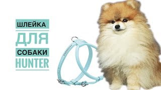 видео Шлейки для собак