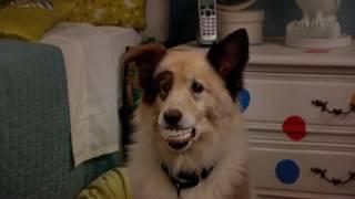 Собака точка ком - Сезон 1 Серии 4, 5, 6 - смотри все серии подряд | Сериал Disney