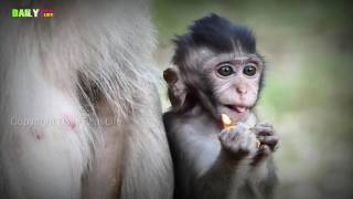 Amazing crazy funny monkey play game with dog - beautiful girl and baby monkey group