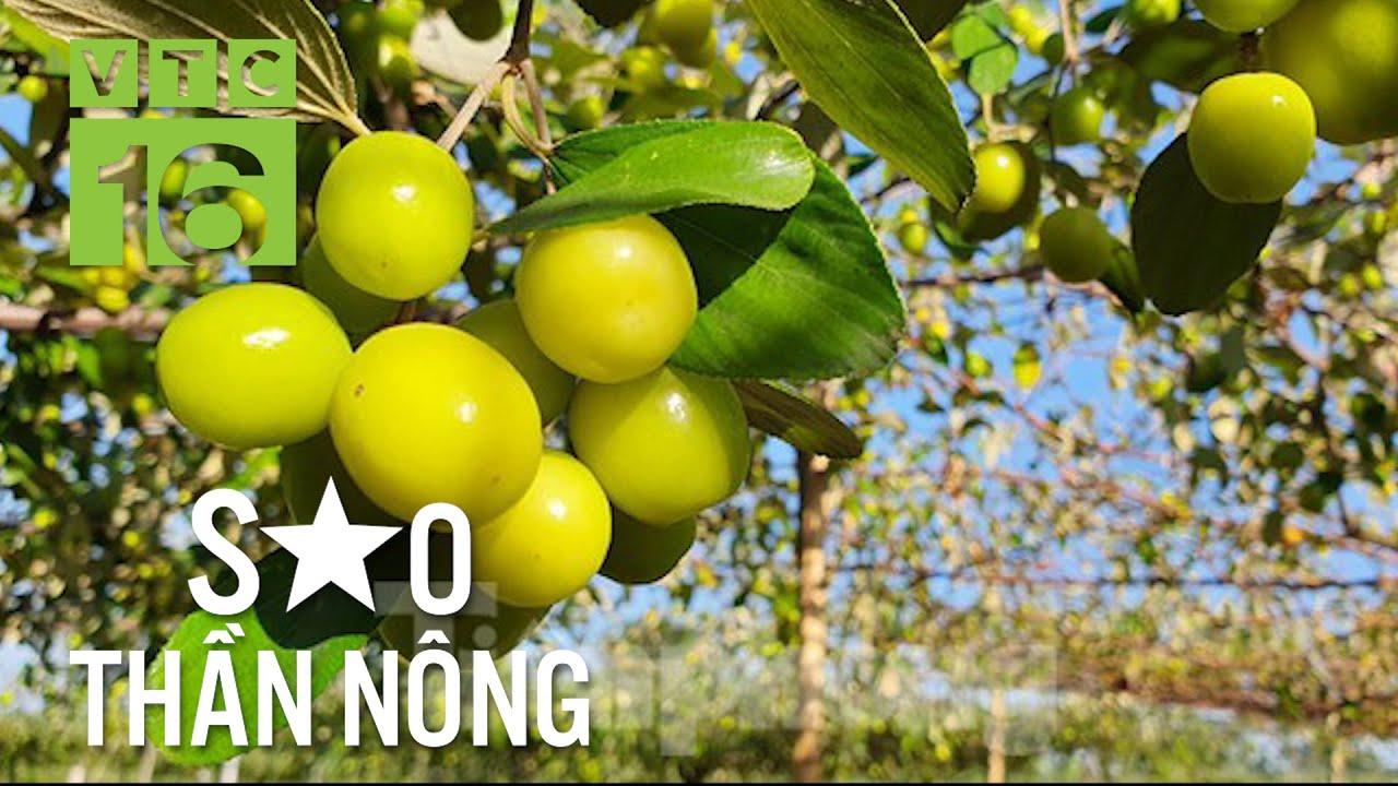Nông dân thành triệu phú nhờ trồng cây ăn quả | VTC16