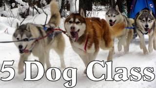 Clear Lake Sled Dog Races 5 Dog Class 2012  -  Siberian Husky Mush M.u.s.h. Dog Sledding