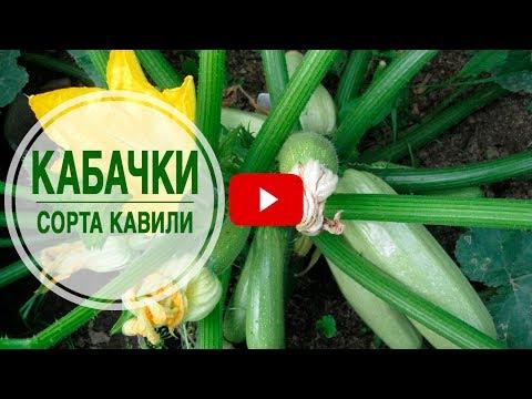Какой сорт кабачков выбрать? ➡ Кабачки КАВИЛИ �� Секреты выращивания