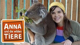 Voll süß Koala! (Doku)   Reportage für Kinder   Anna und die wilden Tiere