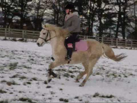 day one - gallops in the snow [giddy up jingle horse pick up your feet] ;)