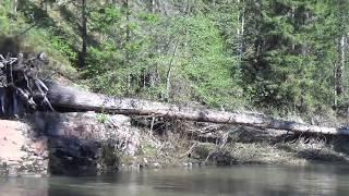 Ловля хариуса в тайге 11 й день из 10 дней рыбалка охота тайга лес природа поход выживание в лесу