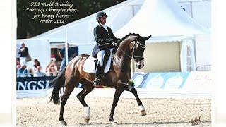7 y old St Georges dressage gelding by Wynton for sale