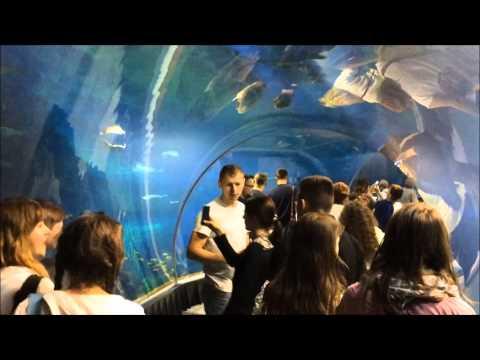 Afrykarium Oceanarium Wrocław. Atarkcje Podwodnego Miasta I Przyrody Afryki W Zoo We Wrocławiu. HD