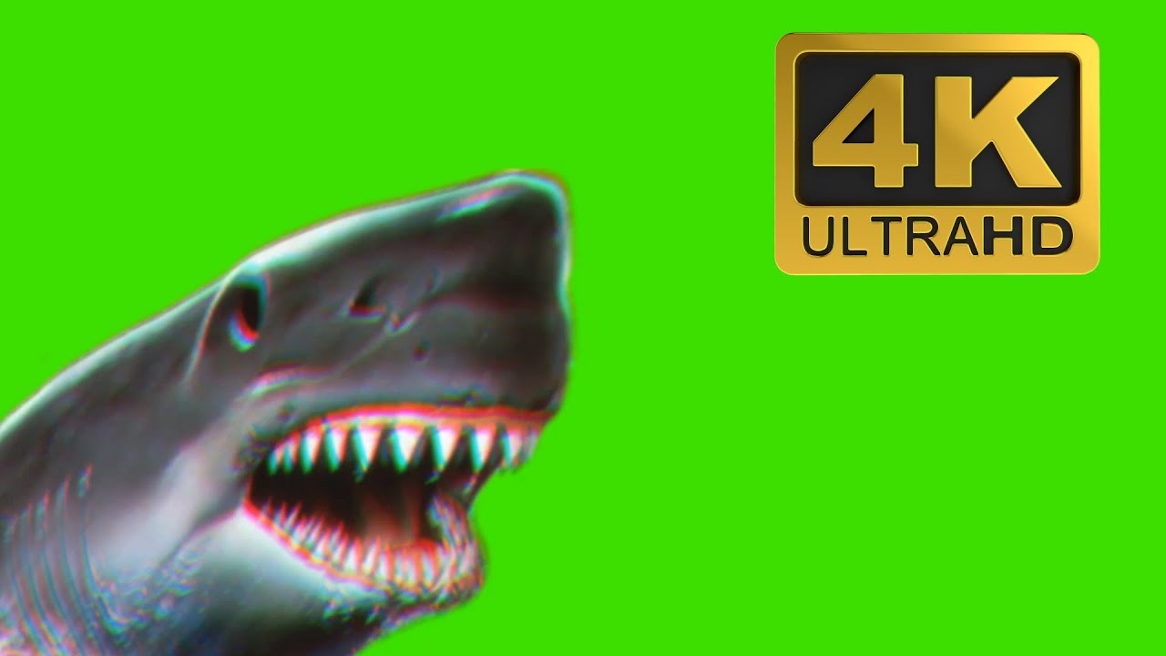 Glitch Shark Attack - Free Green Screen Effects 4K DOWNLOAD - YouTube