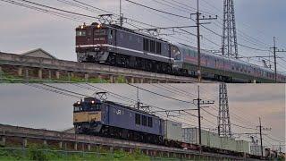 信州カシオペア紀行EF64ぶどう色JR貨物国鉄色競演!武蔵野線貨物列車2020年10月