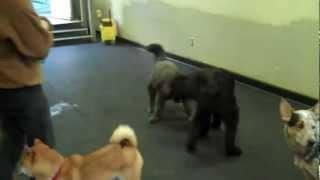 Training Dog Behavior -- The Name Game