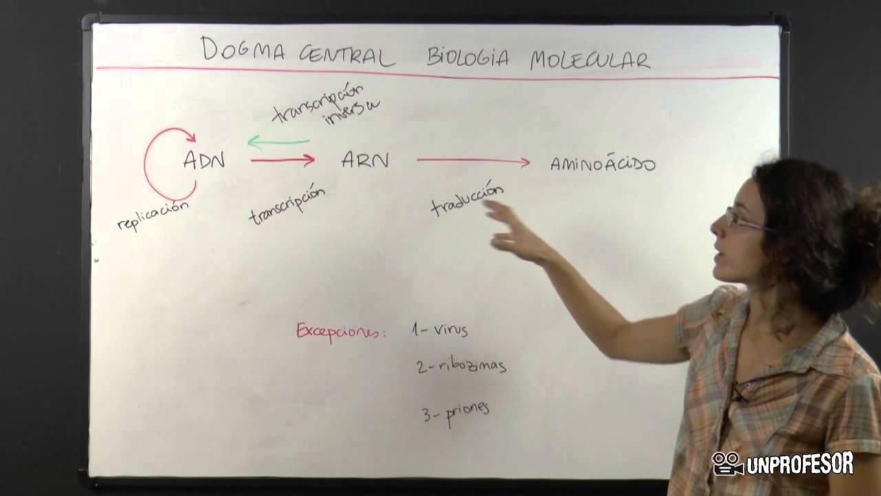 Dogma Central De La Biología Molecular Youtube