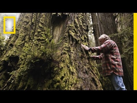 Thumbnail: One Man's Mission to Revive the Last Redwood Forests | Short Film Showcase
