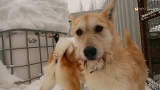 Костомукша приют для собак Добрые руки