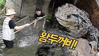 물고기 잡으려다, 대왕두꺼비 발견!