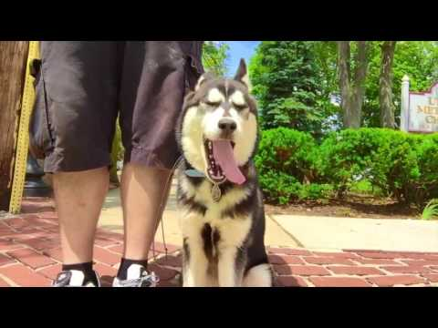 Providence Dog Trainers: Husky, Phoenix, Off Leash | Best Dog Trainers in Rhode Island