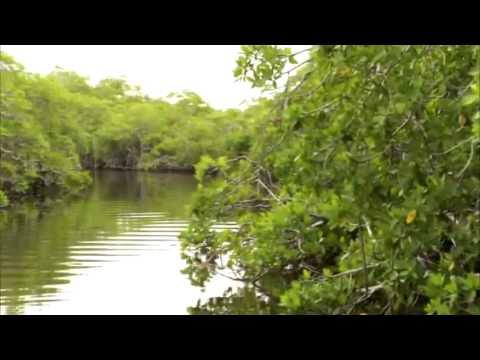 Bacalar Chico Marine Reserve, Ambergris Caye, Belize